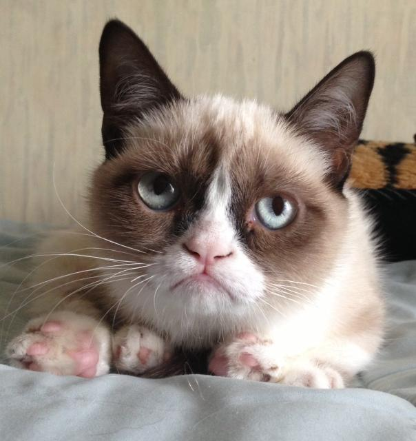 Image of: Realgrumpycat The Lesser Used Original Grumpy Cat Photo Computer Idee Grumpy Cat Know Your Meme