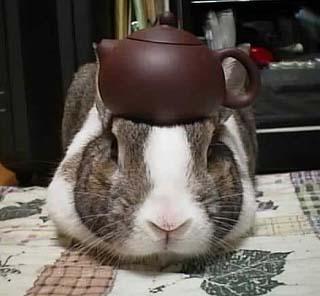 Pancake Tea Rabbit Rabits And Hares
