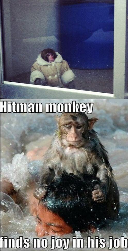 Ikea Monkey Know Your Meme