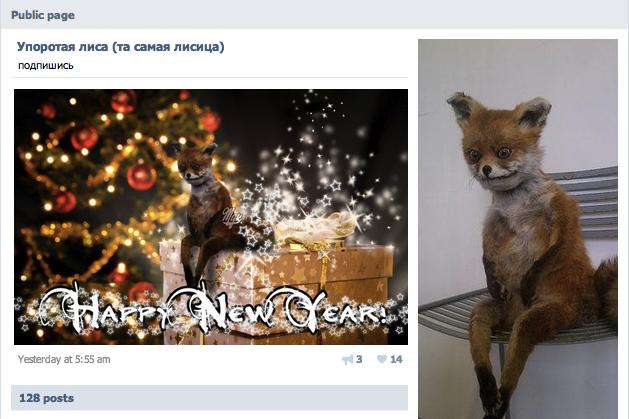 Stoned Fox (Упоротая лиса) | Know Your Meme