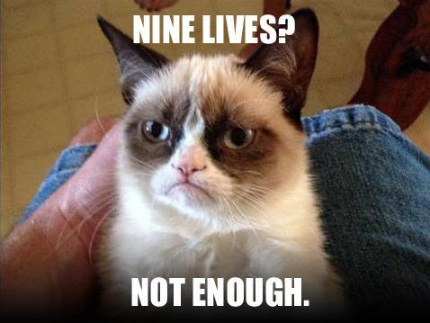 bergelut dunia bisnis harus punya 9 nyawa seperti kucing