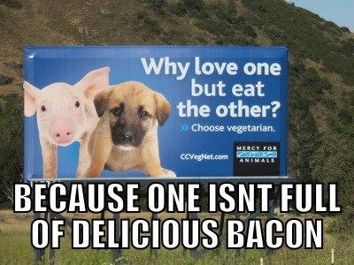 Peta Billboard Question Bacon Know Your Meme