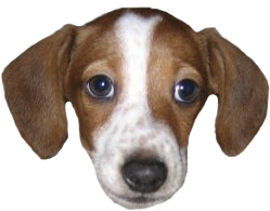 League of Legends dog dog breed harrier dog like mammal english foxhound treeing walker coonhound