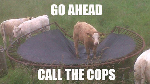 Image result for cow police memes