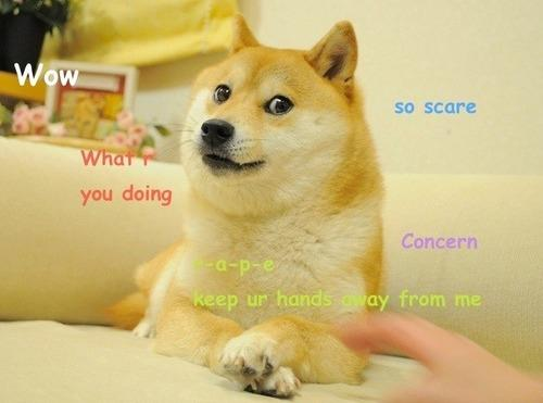 ow so scare you doing Concern keep ur hands ay from me Shiba Inu dog dog like mammal dog breed dog breed group shiba inu