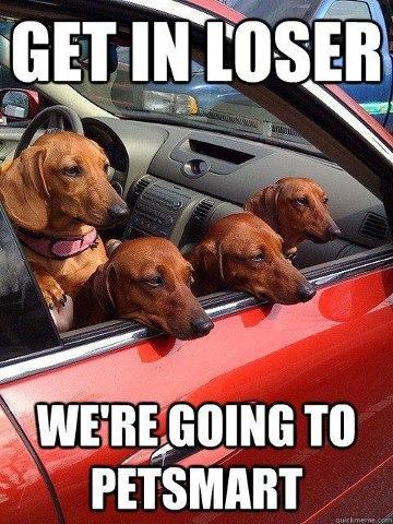 Image 617860 Get In Loser Were Going Shopping Know Your Meme
