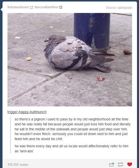 Sausage Addicted Kookaburra Birds Know Your Meme