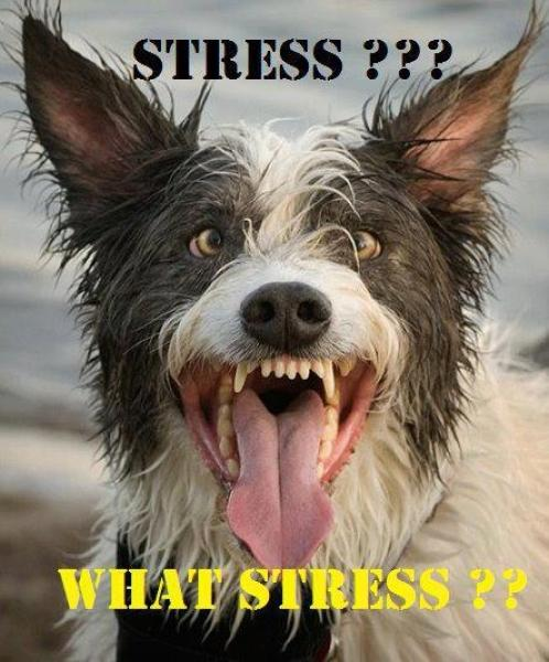 Who Said I M Stressed Depression Dog Know Your Meme