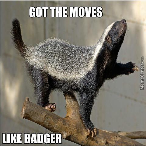 Image result for honey badger meme