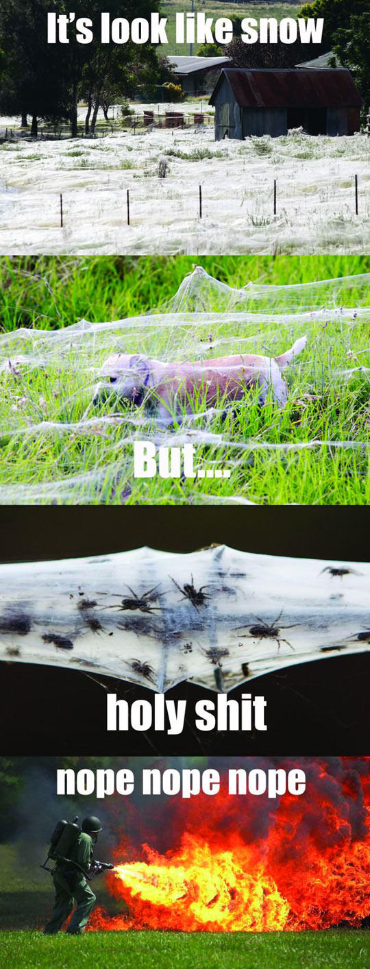 Spider Web Infested Farm Kill It With Fire Know Your Meme
