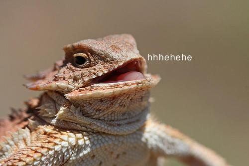 Image result for heh heh lizard