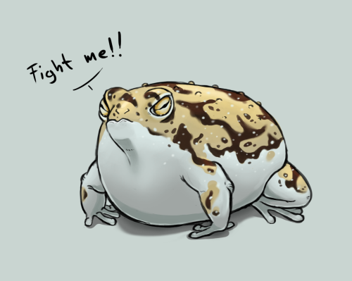 The Angriest Of The Tiniest Frogs The Desert Rain Frog Know