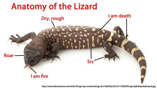 Anatomy Of The Lizard Proper Anatomy Know Your Meme