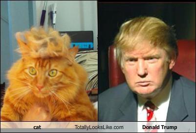 Donald Trumpcat Comparison Trump Your Cat Know Your Meme