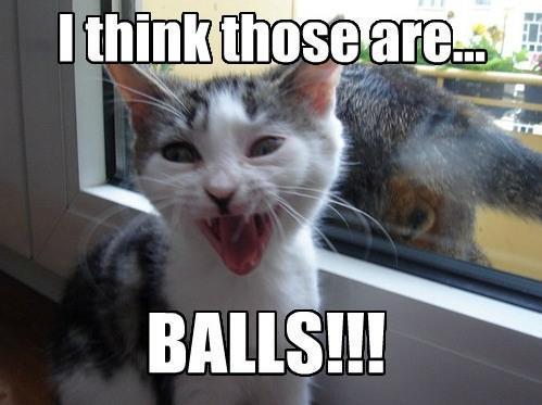 cat balls meme