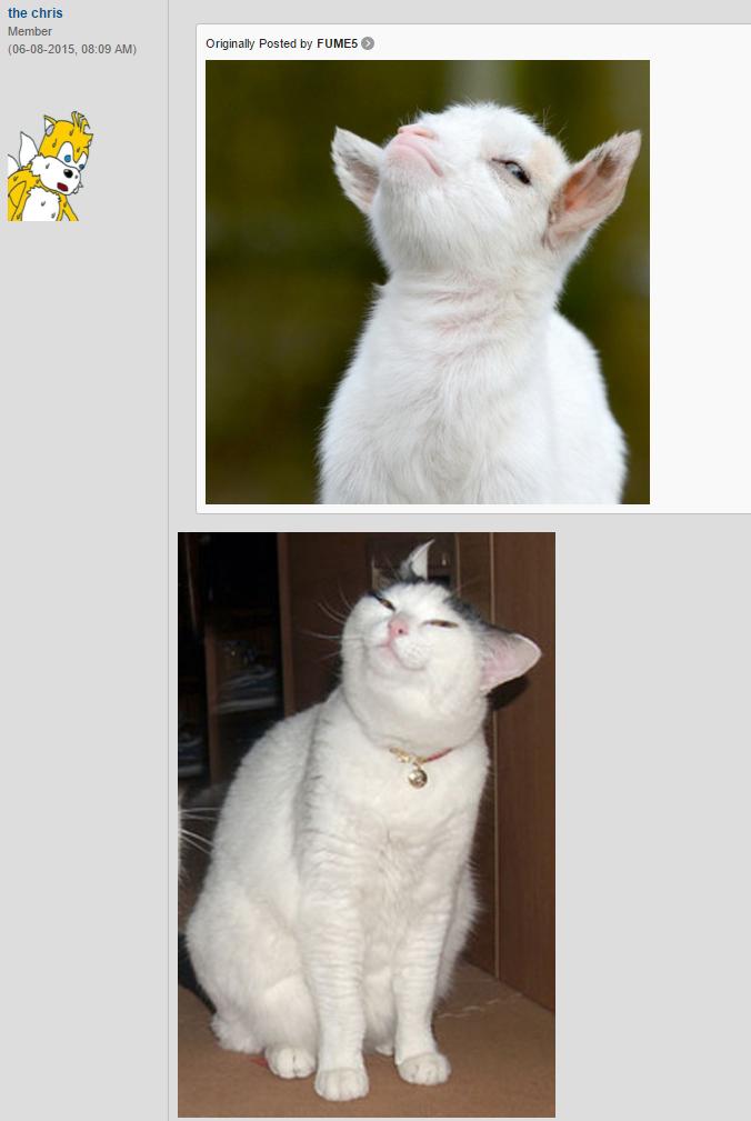 Smug Cat | Know Your Meme
