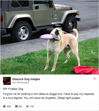 dog getting hit with a frisbee