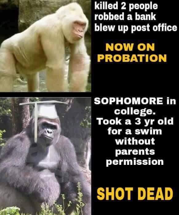 gorilla lives matter harambe the gorilla know your meme