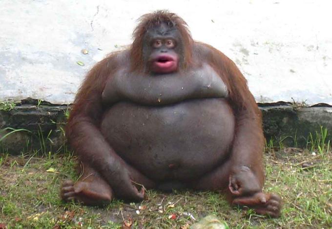 Cat Dog mammal great ape primate common chimpanzee orangutan terrestrial animal western gorilla