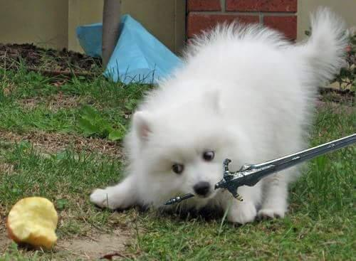 dark souls dog