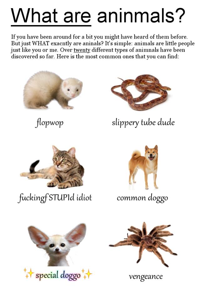 Doggo Know Your Meme