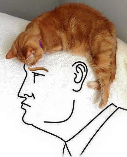 Cat Hair Donald Trump Know Your Meme