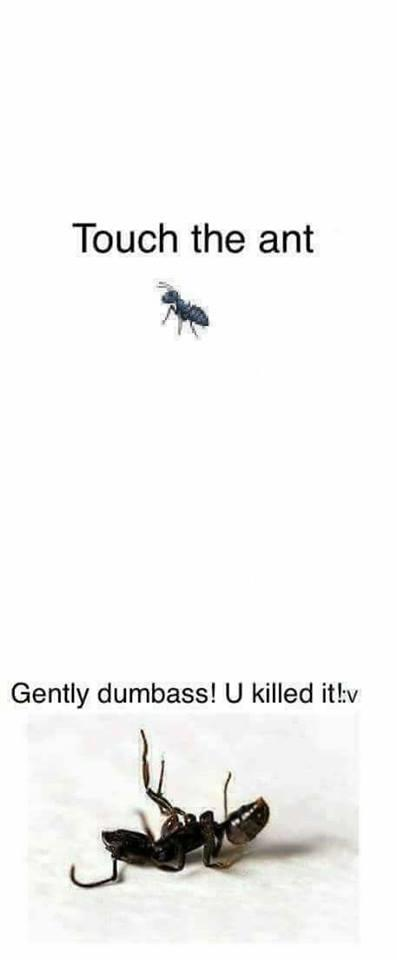 Original Image Touch The Ant Know Your Meme
