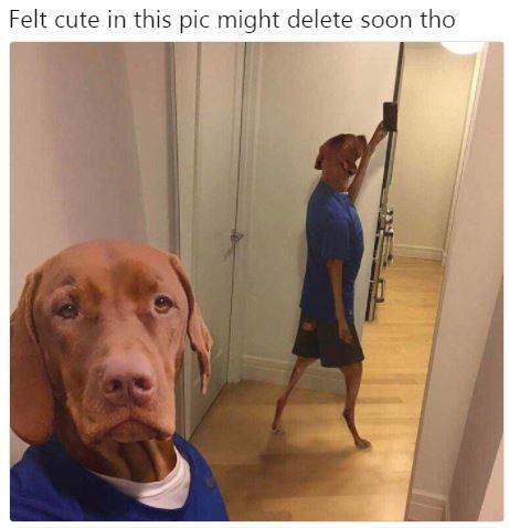 Feeling Cute Might Delete Later Know Your Meme