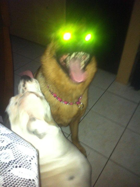 The Dog Blog 907