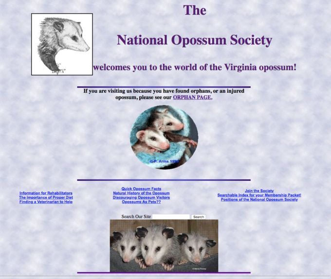 Possums | Know Your Meme