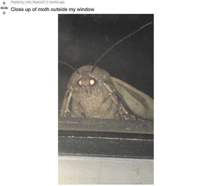 Posted by u/No Reason27 2 months ago 33.0k Close up of moth outside my window