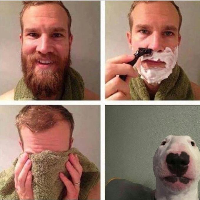 Walter Nelson The Bull Terrier Meme