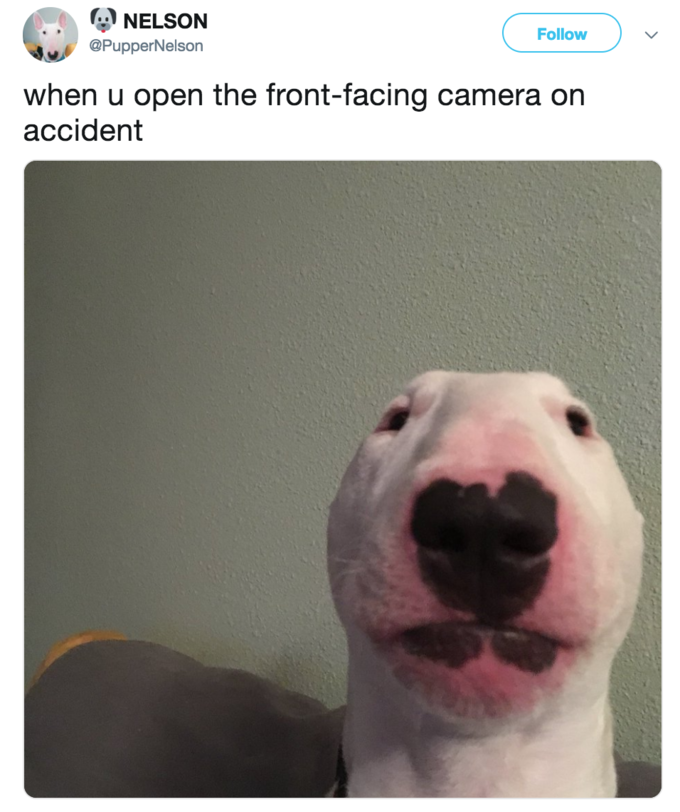 Nelson the Bull Terrier | Know Your Meme