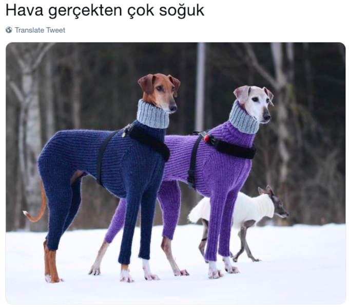 Turtleneck Sweater Dogs