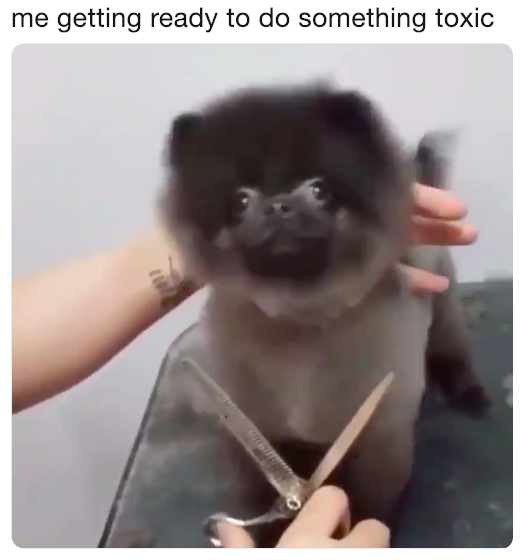 me getting ready to do something toxic | Dancing Dog Gets Haircut | Know Your Meme