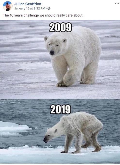 Polar Bear 10 Year Challenge Know Your Meme