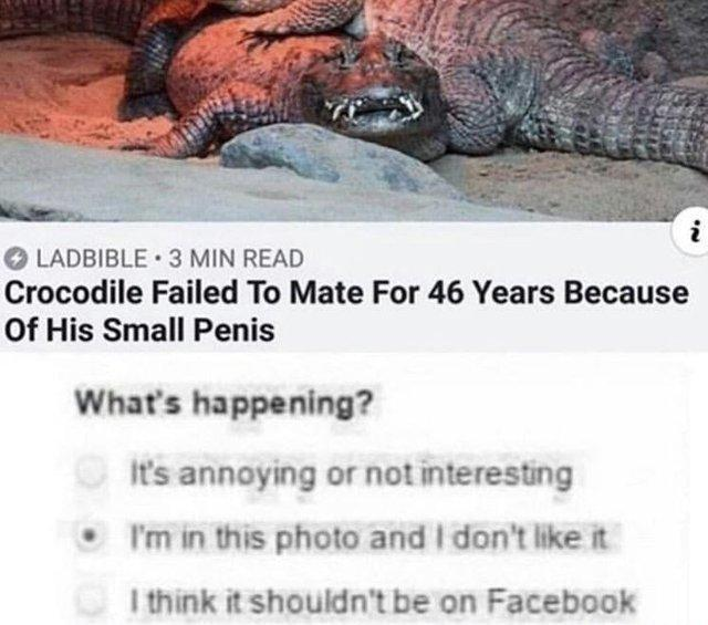 LADBIBLE 3 MIN READ Crocodile Failed To Mate For 46 Years Because Of His Small Penis What's happening? It's annoying or not interesting . I'm in this photo and I don't like it I think it shouldn't be on Facebook Terrestrial animal Komodo dragon Text Organism Adaptation