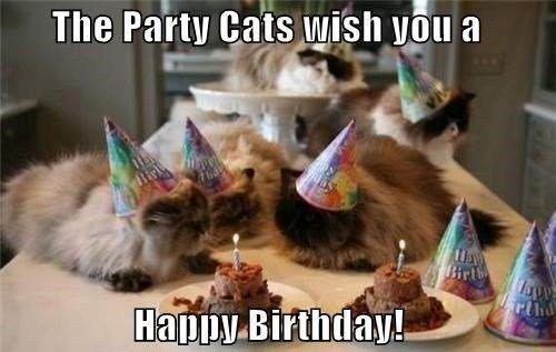 Party Cats In Kitchen Wishing Collective Happy Birthday