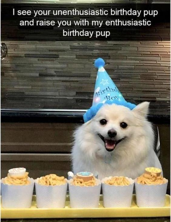Enthusiastic Alaskan Eskimo Dog Is On Another Birthday Level