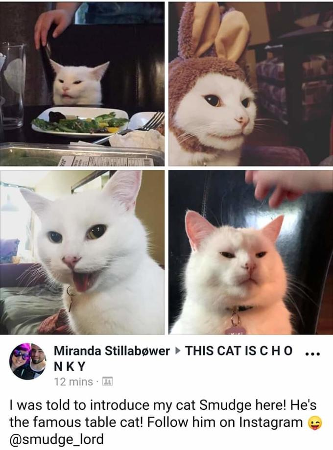 Smudge The Cat Know Your Meme