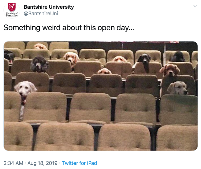Something weird about this open day    | Service Dogs in a