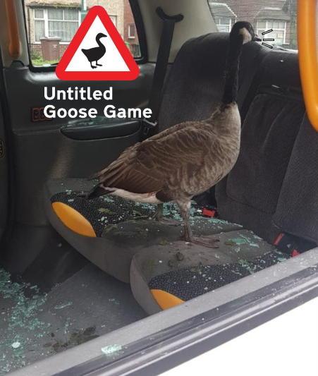 Untitled Goose Game Bird