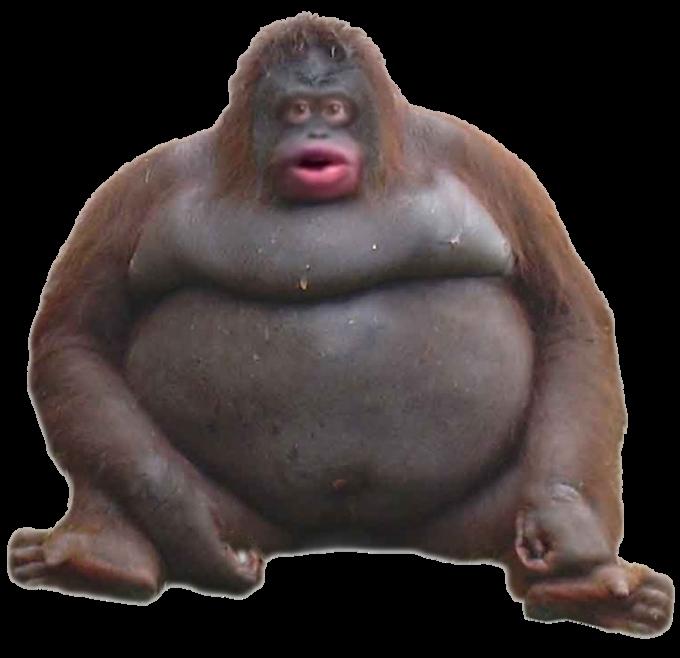Mammal Primate Head Orangutan Common chimpanzee Human