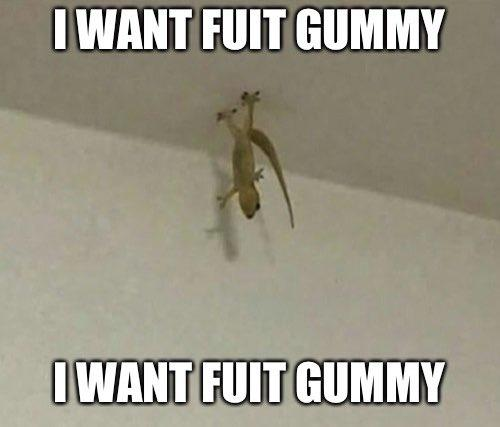 I Want Fuit Gummy Know Your Meme All orders are custom made and most ship worldwide within 24 hours. i want fuit gummy know your meme