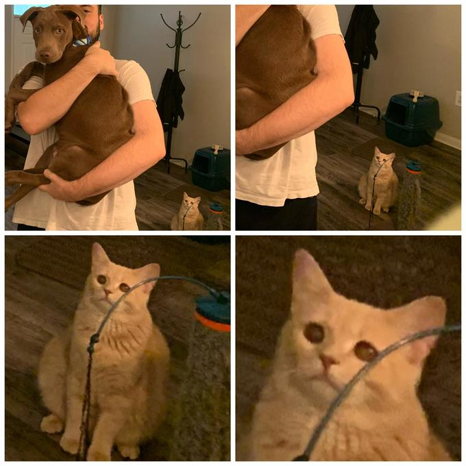 Cat Looking At Man Holding Dog Know Your Meme