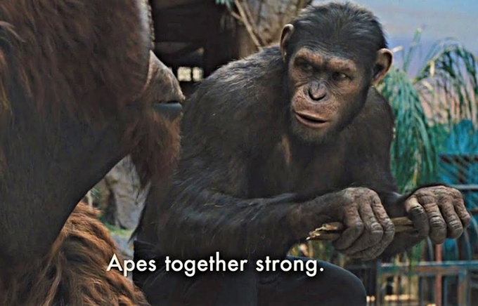 Apes Together Strong | Know Your Meme