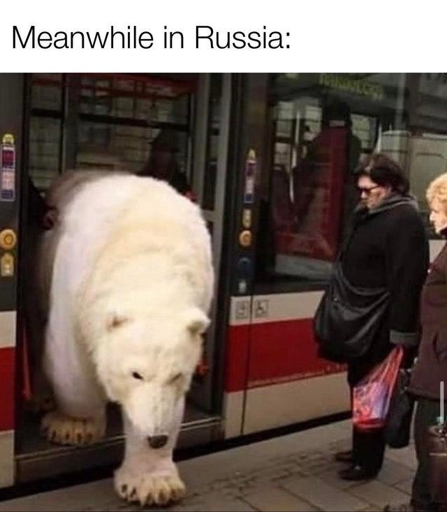 Meanwhile in Russia: CH Canidae Dog
