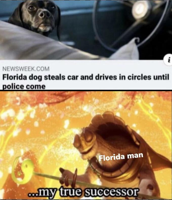 NEWSWEEK.COM Florida dog steals car and drives in circles until police come Florida man: my true successor | news headline photo of a black dog sitting in the driver's seat in a car before the steering wheel. Kung Fu panda master Oogay surrounded by gold glitter and holding a staff with the Yin Yang symbol