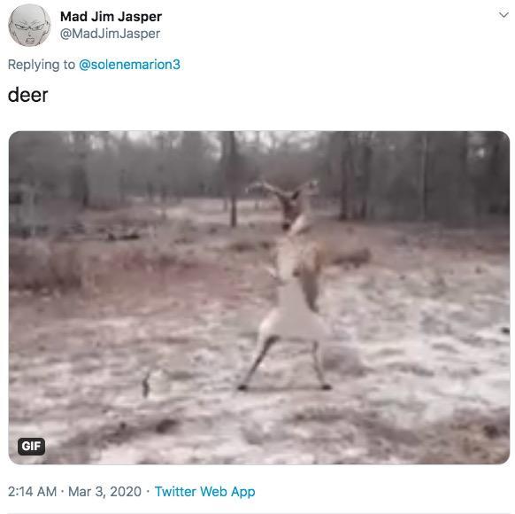 Dead Deer Meme Dolphin - apsgeyser