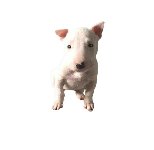 Baby Doge Meme Png - cutedoggalery